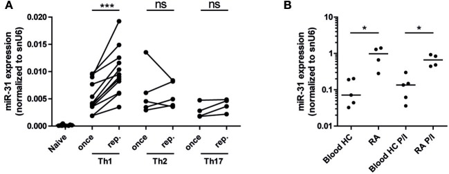 MiR-31 is upregulated in murine Th1 rep cells, and in memory Th cells from the synovial fluid of RA patients. (A) MiR-31 expression in once (day 6) and repeatedly (three rounds of restimulation with 6 day intervals) activated Th1, Th2, Th17, and ex vivo isolated naive CD4 + cells normalized to snU6 determined by qRT-PCR. Each data point represents an independent experiment ( n = 12 [naive and Th1], 5 [Th2], 4 [Th17]) (Wilcoxon-Test for paired data, *** p ≤ 0.001). (B) MiR-31 expression normalized to snU6 in CD3 + CD4 + CD14 − CD45RO + T cells isolated from the synovial fluid of patients suffering from RA or blood from healthy control (HC) donors ex vivo or after 3 h of restimulation with PMA/ionomycin (P/I) ( n = 5 RA; n = 4 HC) determined by qRT-PCR. Each data point represents an individual donor, horizontal bar: median (Mann-Whitney test for unpaired data, * p ≤ 0.05).