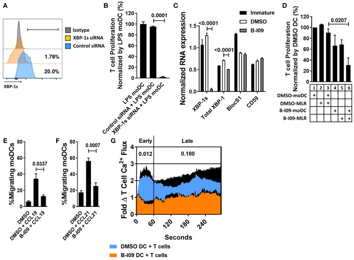 XBP-1s inhibition reduces the stimulatory potency of moDCs toward allogeneic T cells. Human moDCs were stimulated with LPS (1 μg/ml) for 24 h in the presence of XBP-1 or control siRNA. (A) Representative histograms show XBP-1s expression in siRNA-treated moDCs. (B) T cells were stimulated by XBP-1- or control-siRNA-treated moDCs in alloMLRs. T cell proliferation (MTS colormetric assay) after 5 days is shown. AlloMLRs were plated in replicates of 5 at a moDC: T cell ratio of 1:30. 1 representative experiment of 2 independent studies is shown, Dunnett's test. (C) Human moDCs were stimulated with LPS (1 μg/ml) for 24 h in the presence of B-I09 (20 μM) or DMSO (0.1%). Bar graph shows triplicate mean XBP-1s or total XBP-1 mRNA, vs. the RIDD components BlocS1 and CD59 in B-I09- or DMSO-treated moDCs after 24 h of LPS stimulation as measured by RT-PCR. 1 representative experiment of 4 independent studies is shown, Tukey's test. (D) T cell proliferation (MTS colormetric assay) measured in 5-day MLRs using B-I09- or DMSO-treated allogeneic, moDCs. Table depicts whether moDCs were pre-treated with DMSO (0.1%) or B-I09 (20 μM), or if DMSO (0.1%) or B-I09 (20 μM) was added to the MLR medium. Replicate means from 4 independent experiments are shown, Dunnett's test. (E,F) Human moDCs were LPS-stimulated for 24 h with B-I09 or DMSO. Bar graphs show proportion of migrating moDCs in transwell assays testing CCL19 or CCL21 (300 ng/ml, 3 h) chemotaxis. Replicate means from 4 independent experiments are shown for each, Dunnett's test. (G) Human moDCs were stimulated with LPS (1 μg/ml) for 24 h in the presence of B-I09 (20 μM) or DMSO (0.1%), and then used to activate allogeneic T cells for 5 days. T cells were rested for 24 h at 37°C, loaded with Fluo-4 dye for 30 min, then restimulated with fresh B-I09- or DMSO-treated moDCs during live cell imaging to monitor calcium flux in real time. Replicate means from 3 independent studies are shown. P values are shown for early (