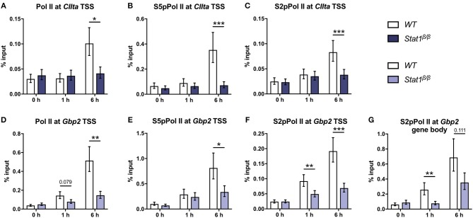 Promoter occupancy of Pol II, S5 phosphorylated Pol II (S5pPol II), and S2 phosphorylated Pol II (S2pPol II) around the CIIta and Gbp2 TSS and of S2pPol II at the Gbp2 gene body. BMDMs from WT and Stat1 β/β mice were stimulated with IFNγ for the times indicated or left untreated (0 h). The association of Pol II, S5pPol II, and S2pPol II with the TSS of (A–C) CIIta pIV and (D–F) Gbp2 TSS, and (G) association of S2pPol II with the Gbp2 gene body was determined by ChIP. Data were normalized to the input control. Mean values ± SE from three (D,G) , four (A,B) or five (C,E,F) independent experiments are shown; * P ≤ 0.05 , ** P ≤ 0.01 , *** P ≤ 0.001 . Significances are only indicated for the comparisons between genotypes.