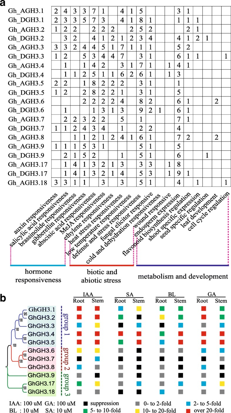 Organization of regulatory elements of GhGH3s and their expression in response to phytohormones. a The regulatory region of each GhGH3 gene was analyzed, the numbers indicate the sum of various cis -acting elements response to the same stimuli. b The summary of GhGH3 expression response to treatment with IAA, SA, BL and GA in roots (R) and stems (S). Each orthologous pair from At- and Dt-subgenome of G. hirsutum was designed as a single gene and tested together due to their highly identical sequences. In total, 11 analogue genes standing for 20 GhGH3s were generated and could be divided into 3 subgroups (subgroups 1–3). The expression pattern of 11 analogue genes was detected by qRT-PCR. The relative expression intensity, that is, the ratio of the highest expression level to that of the 0 h control, was allocated into six different grades ranging from suppression shown as black boxes to over 20-fold induction shown as red boxes