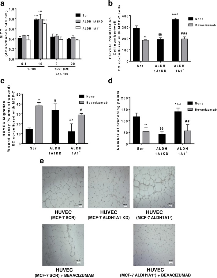 MCF-7 ALDH1A1 regulates endothelial angiogenic features in VEGF dependent manner. a Viability of MCF-7 (Scr, ALDH1A1KD, ALDH1A1 + ) exposed to exogenous serum (10% FBS) or VEGF (2 and 20 ng/ml) at 72 h and evaluated by MTT assay. Data are reported as absorbance at 540 nm. *** p