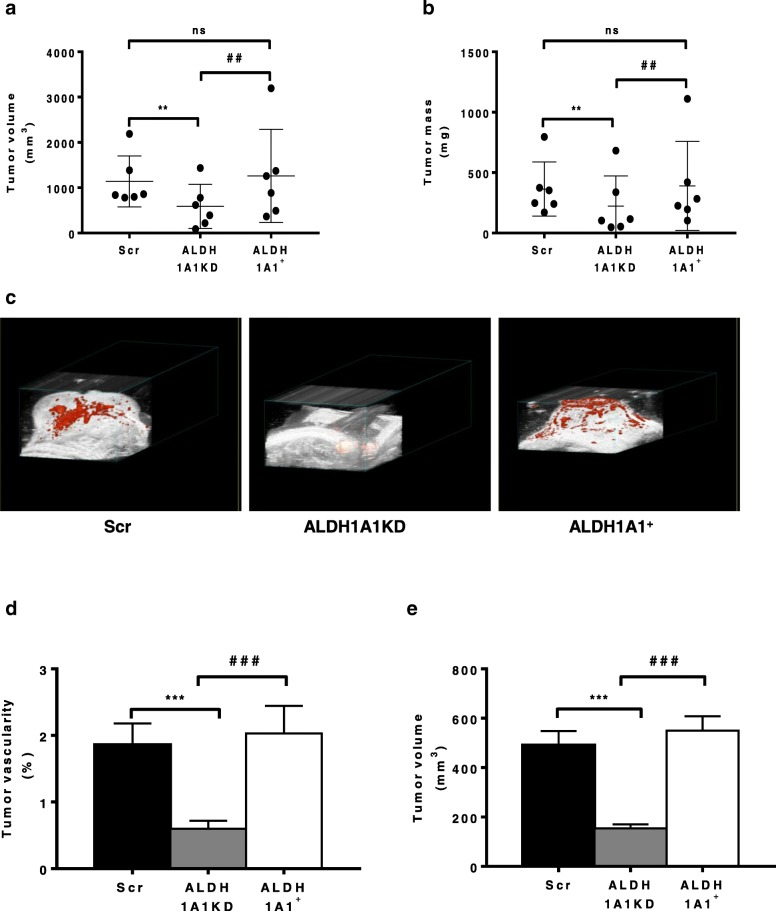 <t>ALDH1A1</t> affects tumor growth and vascular flow in MCF-7 tumor xenograft in athymic nude mice. MCF-7 cells (1 × 10 7 with 50% v /v of Matrigel) were injected s.c. in flank of athymic female nude mice. β-estradiol were injected (3 mg/kg), every 7 days i.m.. All mice were sacrificed at day 23. Tumor volumes were detected twice a week using a caliper and calculated by the formula: shortest diameter × longest diameter × thickness of the tumor in mm ( n = 6 animals per group). a Tumor volume at day 23. ** p