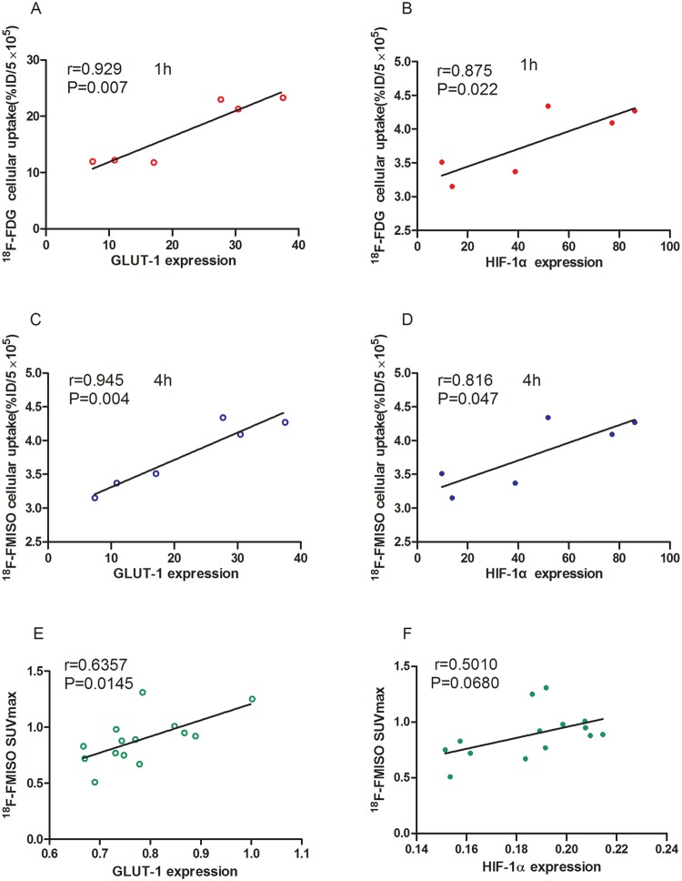 Correlation analyses between various parameters. ( A ) and ( B ) correlation of 18F-FDG uptake with GLUT-1 ( A ) and HIF-1α ( B ) expression in vitro . ( C , D ) correlation of 18 F-FMISO uptake with GLUT-1 ( C ) and HIF-1α ( D ) expression in vitro . ( E ) and ( F ) correlation of in vivo values of 18 F-FMISO SUVmax with GLUT-1 ( E ) and HIF-1α ( F ) expression in tumor tissues.