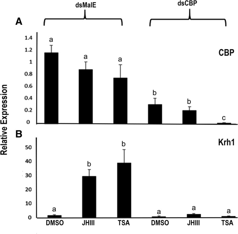 TcA cells respond to both juvenile hormone and TSA after dsmalE and dsCBP treatment. Total RNA was isolated from 100,000 cells that were cultured in the medium containing either dsmalE or dsCBP for 72 h. The cells were then exposed to DMSO (