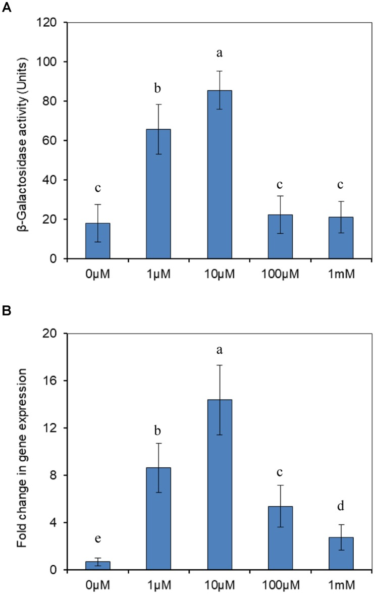 Transcriptional analysis of modABC genes. (A) Expression of β-galactosidase from a P modABC :: lacZ fusion in P. putida J5. Cells were grown aerobically in NI medium supplemented with different concentrations of molybdate. (B) RT-qPCR analysis of the modA gene transcript produced in P. putida J5 that was grown as described above. Results presented in these histograms are the means of three independent experiments, and error bars indicate the standard deviations. Different letters represent significant differences between the treatments.