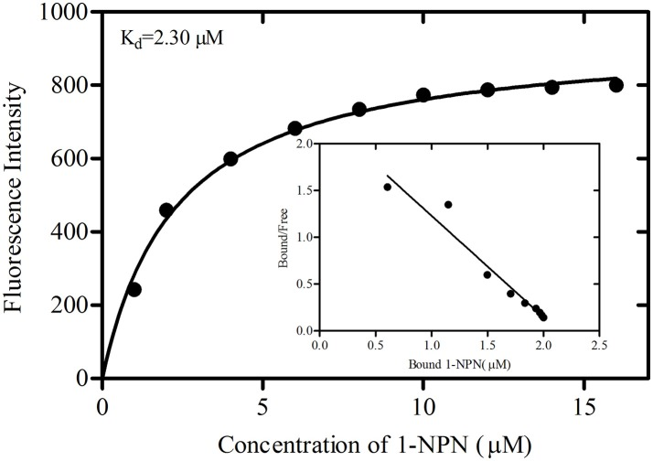 Binding curve of 1-NPN and Scatchard plots for recombinant GmolOBP7. A 2 μM solution of protein in 20 mM Tris-HCl buffer (pH 7.4) was titrated with 1 mM 1-NPN solution to final concentrations of 1 to 18 μM, and the emission spectra were recorded between 370 and 550 nm. The dissociation constant (K d ) of GmolOBP7 was 2.30 μM.