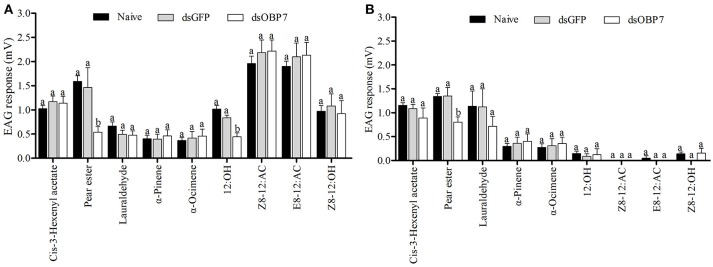 Electrophysiological response of Grapholita molesta to nine stimulants after RNAi knockdown. (A) male and (B) female moths. dsGmolOBP7 and dsGFP indicates treated moths injected with GmolOBP7 dsRNA and GFP dsRNA, respectively. Each treatment included 8 months, the antennae were stimulated with 15 μL volatile compound dissolved in liquid paraffin (ck), and ck and ( Z )-3-hexenyl acetate were used to stimulate the antennae before and after a group of volatiles stimulation. Different letters indicate significant differences between dsRNA-treated moths and non-injected moths (independent t -test, α = 0.05).