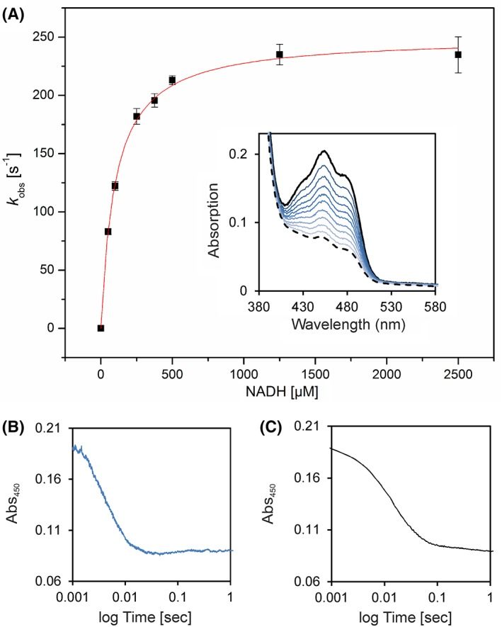 Pre‐steady‐state kinetics of Irc15p to determine reductive rates for NADH. (A) The rate of reduction was determined under anoxic conditions with the stopped flow device equipped with a diode array detector. At least three independent measurements were performed (error bars are shown as standard deviations). The inset displays selected absorption spectra of the reduction of ~20 μM Irc15p with 375 μM NADH. (B) Absorption change at 450 nm of the reduction of ~20 μM Irc15p with 1250 μM NADH. (C) Absorption change at 450 nm of the reduction of ~20 μM Irc15p with 1000 μM NADPH.