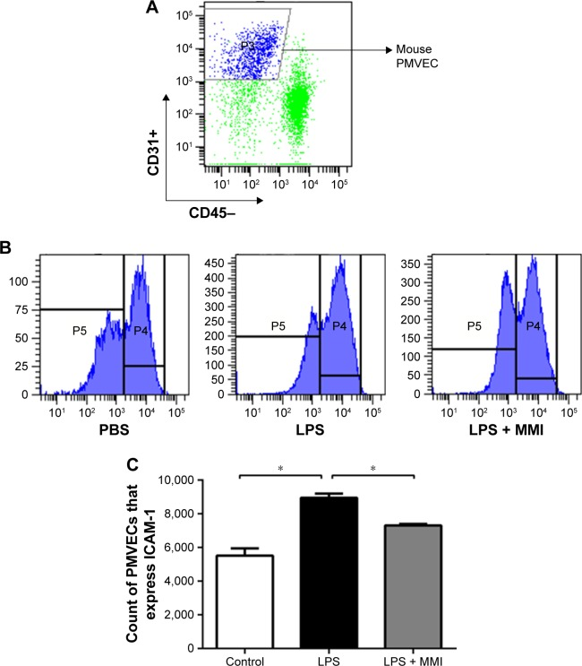 The expression of ICAM-1 on the surface of mouse PMVECs. Notes: The mice were euthanized 24 hours after administration of LPS or PBS, and then the lung cells were collected. ( A ) PMVECs were labeled with the antibodies CD31+ and CD45-, and then the expression was assessed using a flow cytometer. ( B ) ICAM-1 was labeled with the antibody against CD54+. ( C ) The expression of ICAM-1 on the membranes of mouse PMVECs was higher in the LPS group than in the other groups. The values presented are the mean ± SEM (n=15 in each group). Comparisons were made by one-way ANOVA, and the results are representative of three independent experiments (* P
