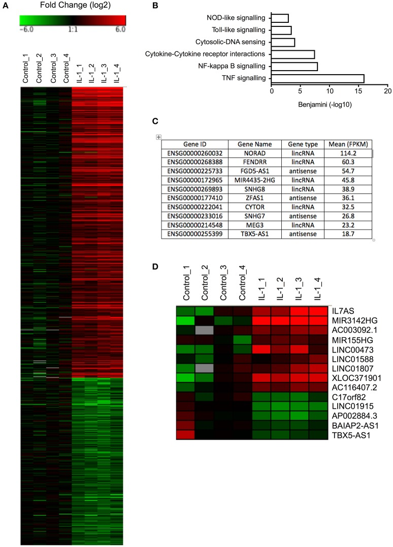Differential expression of mRNAs and lncRNAs following IL-1β-stimulation of control lung fibroblasts . (A) Heat map showing the differential expression of mRNAs in control fibroblasts following IL-1β stimulation for 6 h. (B) Pathway analysis of up-regulated mRNAs. (C) Top 10 most highly expressed lncRNA in non-stimulated control fibroblasts. (D) Heat map showing the differential expression of lncRNAs in control fibroblasts following IL-1β stimulation for 6 h.