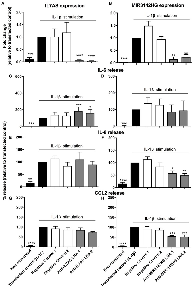 IL7AS and MIR3142HG regulate the IL-1β-stimulated inflammatory response in control fibroblasts. Control fibroblasts were transfected overnight with LNA antisense sequences against IL7AS (A/C/E/G) and MIR3142HG (B/D/F/H) or scrambled (negative) controls. Cell were then stimulated with IL-1β for 24 h prior to isolation of RNA and measurement of IL7AS (A) or MIR3142HG (B) by qRT-PCR or measurement of supernatant IL-6 (C,D) , IL-8 (E,F) , and CCL2 (G,H) by ELISA. Data represents the mean ± SEM of five control individuals. Following normalization against the IL1β-stimulated cells (100%), statistical significance was assessed (vs. IL1β-stimulated cells) using the repeat measures 1-way analysis of variance (ANOVA) with a Dunnett's test where * p