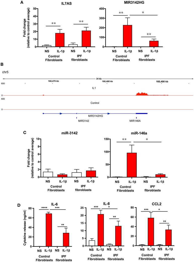 IL-1β-induced expression of IL7AS, MIR3142HG, miR-146a, miR-3142 and inflammatory mediators in control and IPF fibroblasts . (A) Control and IPF fibroblasts were incubated in the absence of presence of IL-1β for 24 h and the fold-change in the IL7AS and MIR3142 expression determined by qRT-PCR, (B) Aligned sequencing data (merged BAM files) showing MIR3142HG from control and IL-1β-stimulated control fibroblasts was visualized using the IGV genome browser ( https://software.broadinstitute.org/software/igv/ ). Control and IPF fibroblasts were incubated in the absence of presence of IL-1β for 24 h before determination of the fold-change in miR-3142 and miR-146a expression by qRT-PCR (C) and the release of IL-6, IL-8, and CCL2 by ELISA (D) . Values are the mean ± SEM of five control and IPF patients and statistical significance was assessed using 1-way analysis of variance (ANOVA) where * p