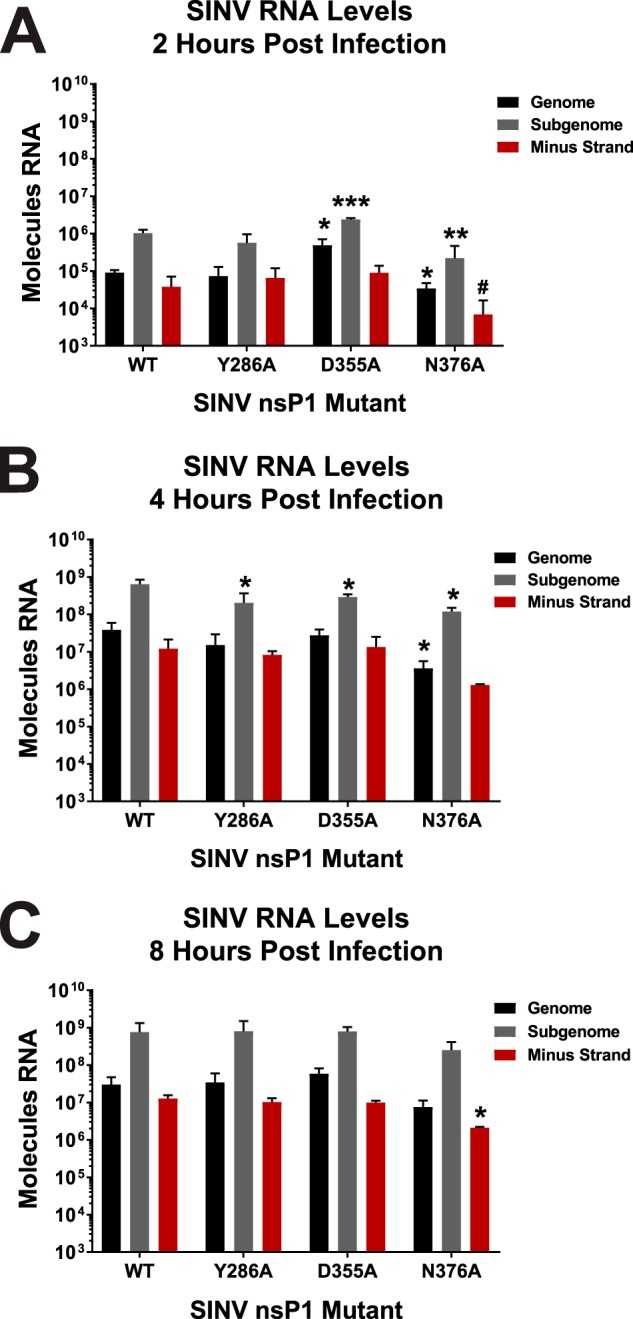 Altering vRNA capping efficiency impacts early RNA synthesis. (A) BHK-21 cells were infected with either wild-type parental SINV or an individual capping mutant virus at an MOI of 5 PFU/cell. At 2 h post-infection, the total cellular RNA was extracted and assessed for the absolute quantities of the genomic, subgenomic, and minus-strand vRNAs by qRT-PCR. (B and C) Identical to panel A, with the exception that the time points represent 4 and 8 h post-infection, respectively. All the quantitative data shown represent means of results from three independent biological replicates, with the error bars representing standard deviations of the means. Statistical significance data, as indicated in the figure, were first determined using ANOVA followed by post hoc statistical analyses by Student's t test. The P values determined by Student's t test are represented as follows: *, P
