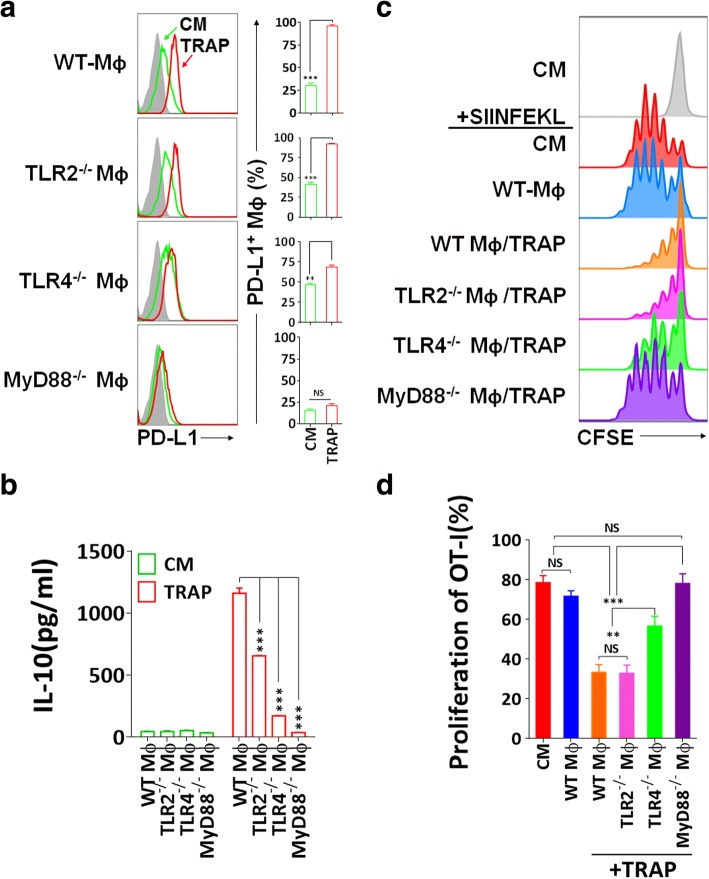 Immunosuppression mediated by TRAPs treated BMDMs is dependent on TLR4-MyD88 signaling. a Expression analysis of PD-L1 by flow cytometry. BMDMs derived from WT, TLR2 −/− , TLR4 −/− , or MyD88 −/− mice were incubated with TRAPs (10 μg/ml) for 48 h. b ELISA detection of IL-10 secreted from BMDMs exposed to TRAPs (10 μg/ml) for 72 h. c , d Detection of OT-I CD8 + T cell division by flow cytometry. BMDMs derived from WT, TLR2 −/− , TLR4 −/− , or MyD88 −/− mice were left untreated or pretreated with B16F10 TRAPs (10 μg/ml) for 2 d, and pulsed with peptide SIINFEKL (1 μg/ml) for 2 h, washed, and followed by coculture with CFSE-labeled OT-I splenocytes for 3 d at a ratio of 1:20. Data (mean ± SEM) are representative of three independent experiments. ** p