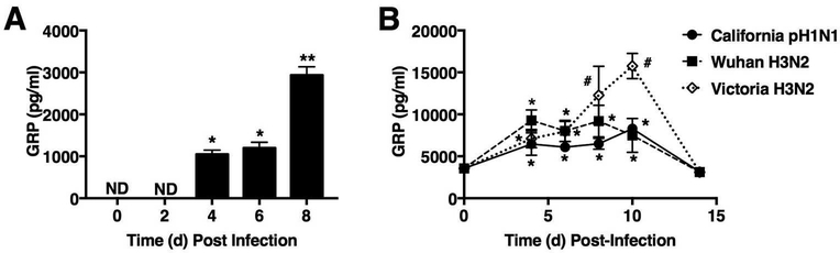 Influenza infection of mice and cotton rats induces GRP in lungs and serum. (A) WT C57BL/6J mice were infected with mouse-adapted influenza strain PR8 (LD 90 ; ~7500 TCID 50 ). Mice were euthanized on days 0, 2, 4, 6, and 8 post-infection (3–5 mice/group; * p