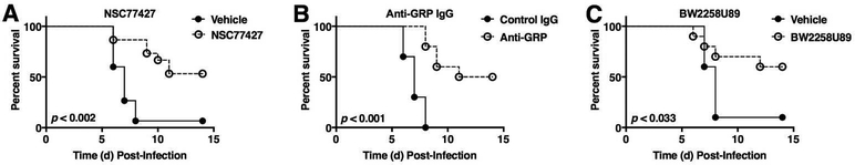 Blocking GRP and GRPR enhances survival after influenza infection. (A) WT C57BL/6J mice were infected with mouse-adapted influenza strain PR8 (LD 90 ; ~7500 TCID 50 ). Mice received vehicle (saline + 0.096% DMSO) or GRP inhibitor (NSC77427; 20 μM, 100 μl i.v./mouse) daily from day 2 to day 6 postinfection. Survival was monitored for 14 days. Data shown are combined results of 3 assays (5 mice/treatment group/experiment). (B) WT C57BL/6J mice were infected as described in (A). Mice received either control IgG or a highly specific anti-GRP IgG (100 μg; 100 μl i.v./mouse) on day 2 and day 4 post-PR8 infection. Survival was monitored as in (A). Data shown are combined results of 2 assays (5 mice/treatment group/experiment). (C) WT C57BL/6J mice were infected as described in (A). Mice received vehicle (saline) or GRPR antagonist (BW2258U89; 20 μM, 100 μl i.v./mouse). Survival was monitored as in (A). Data shown are combined results of 2 assays (5 mice/treatment group/experiment).