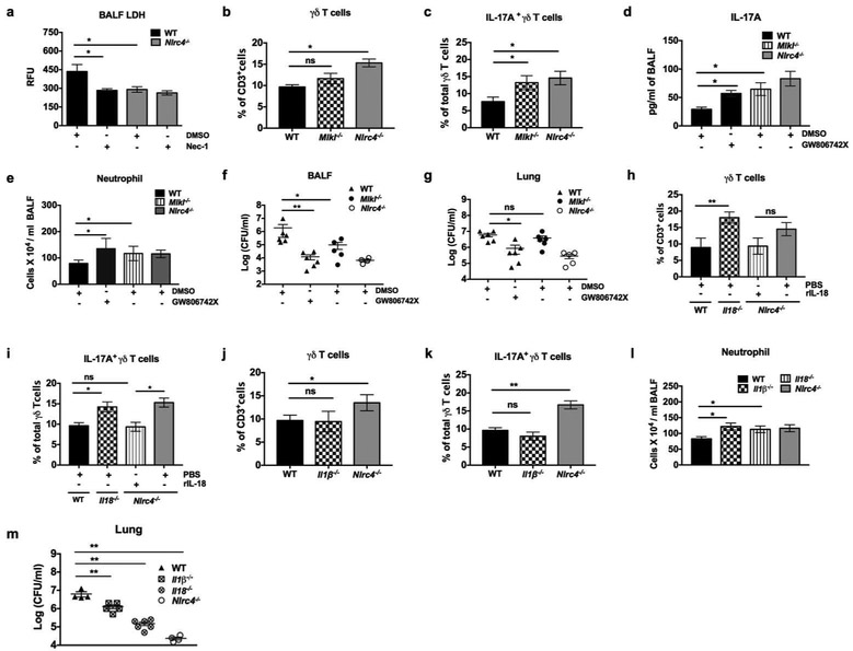 NLRC4-driven necroptosis and IL-18 suppress 17A-dependent neutrophil recruitment by limiting γδ T cell expansion. (a) WT and Nlrc4 −/− mice were treated with Necrostatin-1 or DMSO intraperitoneally 12 hours prior to infection with S. aureus (5 ×10 7 CFU/mouse). RFU of LDH release in BALF was measured at 24 hpi. (n= 5 mice /group). (b-g) WT, Mlkl −/− and Nlrc4 −/− mice were infected with S. aureus (5 ×10 7 CFU/mouse) intratracheally with administration of GW806742X (MLKL inhibitor) or DMSO intraperitoneally 1 hour prior. BALF and lungs were harvested at 24 hpi. (b) The percentage of total γδ T cells and (c) IL-17A producing γδ T cells in the lungs were determined by flow cytometry. (d) IL-17A level, (e) number of neutrophils, and (f) bacterial burden in BALF, and (g) lungs were quantitated. Each symbol represents a single mouse. (n= 4-6 mice /group). (h-m) WT, IL-18 −/− , Il-1β −/− , and Nlrc4 −/− mice were infected with S. aureus (5 ×10 7 CFU/mouse) intratracheally. At 24 hpi, the lungs were harvested and processed for flow cytometric analysis. (h) The percentage of total γδ T cells and (i) IL-17A producing γδ T cells in the lungs of WT, IL-18, −/− , and Nlrc4 −/− mice receiving recombinant murine IL-18 (1μg/mouse) or PBS 1 hpi were enumerated. (j) The percentage of total γδ T cells and (k) IL-17A producing γδ T cells in the lungs of WT, Il-1β, −/− and Nlrc4 −/− mice. (l) The number of neutrophils in BALF and (m) bacterial burden in the lungs at 24 hpi. Each symbol represents a single mouse. (n= 4-6/group). Data from a representative experiment are shown. All experiments were performed three times. Statistical significance was determined by one-way ANOVA (followed by Bonferroni's post hoc comparisons) in all experiments. * p