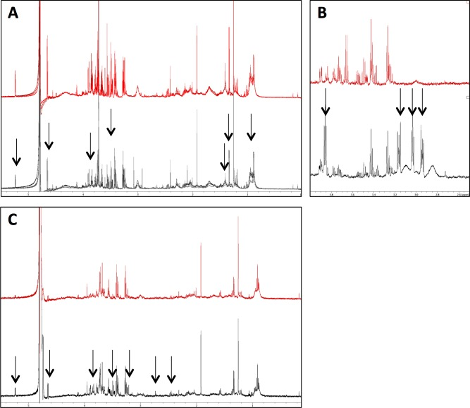Optimisation of neutrophil isolation protocols for NMR metabolomics. (A) Spectra (n = 3) shown for neutrophil isolation protocols including (grey spectra) or omitting (red spectra) a wash step immediately after Ficoll-Paque separation. Metabolite loss in the washed samples is indicated by arrows. (B) Spectra (n = 3) show neutrophils incubated with media containing phosphate buffer (red spectra) or HEPES buffer (grey spectra). Multiple contaminating peaks from HEPES are indicated by arrows. (C) Spectra (n = 3) are shown for sample preparation including (grey spectra) or excluding (red spectra) a heat-shock step immediately prior to snap freezing of pellet. Metabolite degradation/turnover was prevented by heat shock as indicated by arrows.