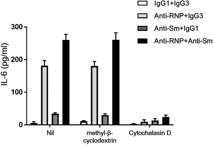 Effects of methyl-β-cyclodextrin and cytochalasin D on the synergistic enhancement of the production of IL-6 of peripheral blood monocytes by anti-Sm mAb and anti-RNP mAb. Highly purified monocytes were cultured in the presence or absence of methyl-β-cyclodextrin (5mM) and cytochalasin D (10 μM) with various combination of anti-Sm mAb, anti-RNP mAb, control IgG1 or IgG3 (3 μg/ml). After 48 hours of incubation, the supernatants were assayed for IL-6. Mean values with standard deviation (error bars) of 2 different experiments with reproducible results are shown.