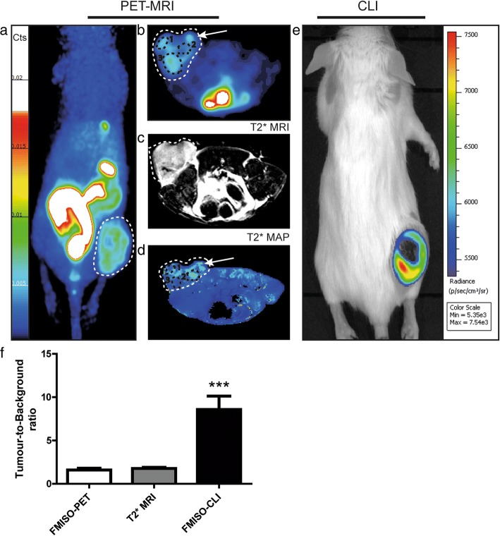 Imaging of hypoxia within CT26 tumour bearing mice ( n = 13), PET-MRI a – d Representative PET-MRI images showing the global co-localisation of FMISO uptake and BOLD MRI signal. Images were acquired 120 min post-injection of 10 MBq of [ 18 F]-Fluoromisonidazole (FMISO). PET. a Representative maximum-intensity-projection FMISO PET Image; b Transversal slice showing FMISO uptake within the tumour; c T2*-weighted MRI and d BOLD image derived from T2* mapping. White dashed lines: tumour limits, white arrows: oxygenated tumour area (increased BOLD signal), black circle: hypoxic tumour areas (decreased BOLD signal). CLI ( e ): Representative FMISO CLI image of the same mouse as for a to d acquired just after the PET-MRI scan. f Tumour-to-background ratio for PET, MRI and CLI following the injection of FMISO determined by the ratio of the signal from the tumour and a contralateral irrelevant region of interest (muscle); n = 13, *** p