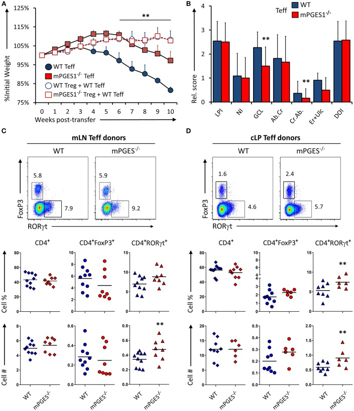 mPGES-1-deficiency in T effector cells protects against colitis. (A) Weight loss in Rag1 −/− mice that received transfer of 1 × 10 6 CD4 + CD25 − CD45RB hi T cells (Teff) from WT or mPGES-1 −/− donors. The dashed lines correspond to mice that received WT Teff and WT or mPGES-1 −/− CD4 + CD25 + (Treg) co-transfers. (B) Colon pathology scores from cohorts receiving transfers of WT or mPGES-1 −/− Teff cells. Flow cytometry analysis of the (C) mesenteric lymph nodes (mLN) and (D) colon lamina propria (cLP) CD4 + populations at the end of the experiment (week 10), with representative dot plots indicating intracellular expression of RORγt and FoxP3 and graphs below indicating summarized results from 4 experiments. ** indicates a significant difference with P