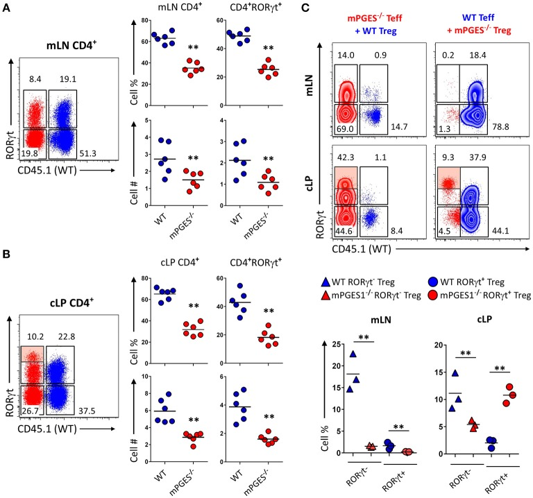 Deficiency in CD4-intrinsic mPGES-1 impairs Teff CD4 + cell expansion but enhances Treg localization and RORγt expression in the colonic lamina propria. (A,B) Rag1 −/− recipient mice received a co-transfer of a 1:1 mix of CD45.1 + WT (blue) and CD45.2 + mPGES-1 −/− (red) Teff cells. Flow cytometric analysis of the (A) mLN and (B) cLP CD4 + populations, with representative dot plots indicating intracellular expression of CD45.1 or CD45.2 congenic marker expression together with RORγt. In the cLP plot (B) , the shaded box indicates a unique RORγt hi population of mPGES-1 deficient cells in the cLP. Graphs on the right indicate the proportions and total numbers for each group. (C) Co-transfer of either CD45.1 + WT Treg with CD45.2 + mPGES-1 −/− Teff cells or CD45.2 + mPGES-1 −−/− Treg cells with CD45.1 + WT Teff into Rag1 −/− recipients. Transfers were always performed with a 2:1 Teff:Treg ratio. In the cLP, mPGES-1 −/− CD4 + T cells are able to acquire higher RORγt expression than WT cells (shaded boxes). These CD4 + RORγt hi cells arise from both mPGES-1 −/− Teff cells and mature Treg cells. Graphs on the bottom show the proportions of WT or mPGES-1 −/− Treg cells that are either RORγt − or RORγt + in the mLN or the cLP. ** P