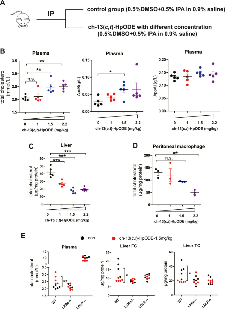 The effects of ch-13( c,t )-HpODE on cholesterol levels in vivo . A. The experimental procedure of ch-13( c,t )-HpODE treatment in vivo . B. Total cholesterol, ApoB and ApoA1 were detected in mice plasma (Duplicates and n = 5) after treating mice with ch-13( c,t )-HpODE. C-D. Total cholesterol was detected with <t>GC-MS</t> in liver (C, n = 5) and peritoneal macrophages (D, 3 repeats per experiment) after treating mice with ch-13( c,t )-HpODE. E. Free or total cholesterol was detected in plasma and liver after treating WT, LXRα-/-and LDLR-/- mice with 1.5 mg/kg ch-13( c,t )-HpODE (n = 5, 3 independent experiments). FC: Free cholesterol; TC: Total cholesterol; n.s.: no significance. Statistical analyses, one-way ANOVA with Dunnett's test or two-way ANOVA and unpaired t -test. * p