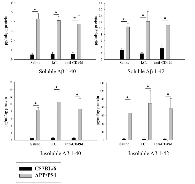 Anti-CD49d injections did not alter Aβ 1-40 and Aβ 1-42 levels in the brain. C57BL/6 and APP/PS1 mice were injected intravenously (tail-vein) with Saline, IgG isotype control (purified NA/LE Rat IgG2b) (I.C.) or 2 mg/kg purified NA/LE rat anti-mouse CD49d (anti-CD49d) once a week for 4 weeks. Part of the parietal cortex from left brain hemispheres was dissected out, lysed and used for soluble and insoluble Aβ 1-42 and Aβ 1-40 measurements using ELISA. Aβ levels were determined from 3-6 animals per group ± SD (*p