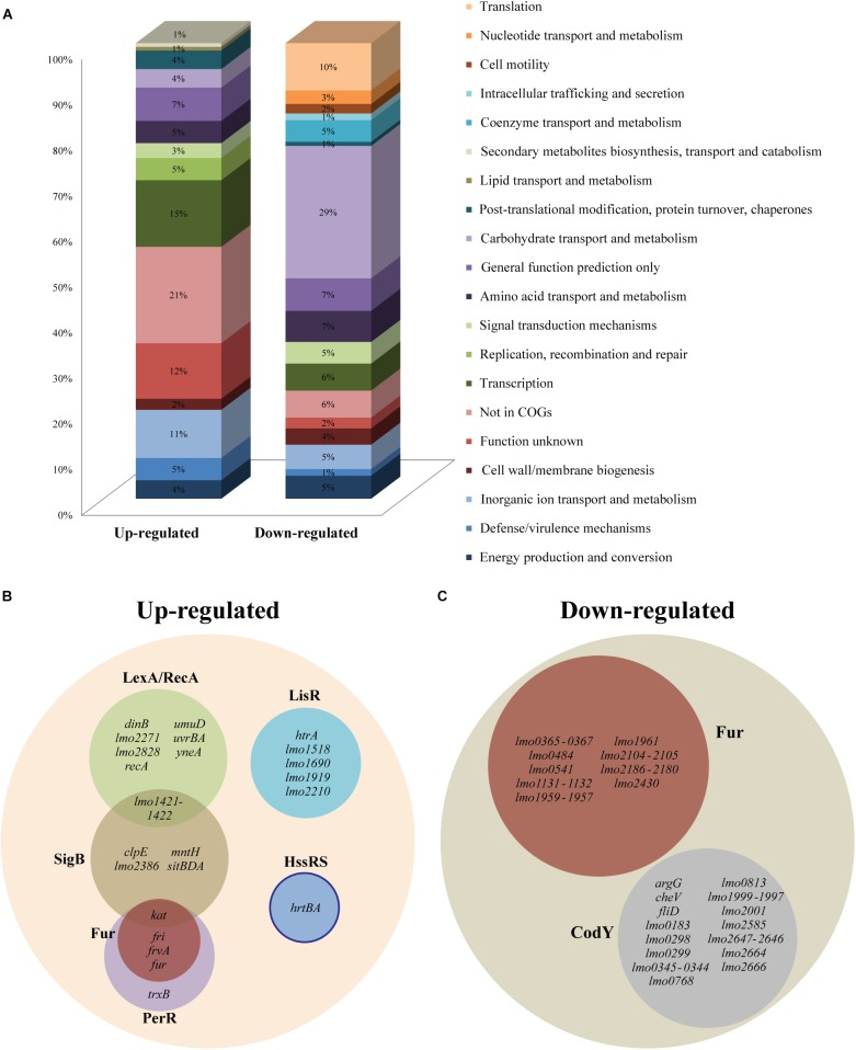 RNA-seq analysis of Listeria monocytogenes EGD-e exposed to heme stress. (A) Distribution of differentially expressed up- and down-regulated genes with at least 4.0-fold change ( p