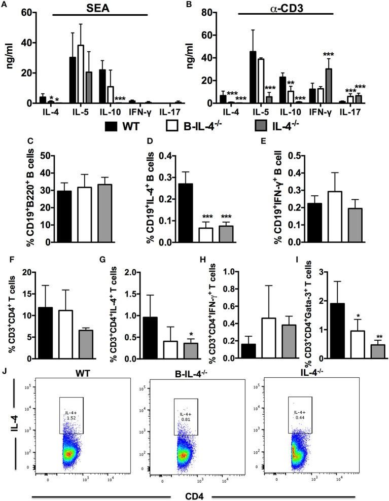 Impaired Th2 immunity in mice lacking IL-4 producing B cells. Bone marrow chimeras were infected with 100 live S. mansoni cercariae and killed 7 weeks post-infection. Single cell suspensions were prepared from MLN and cells were restimulated with 20 μg/ml SEA or α-CD3 in vitro . (A,B) Cytokine production by restimulated total MLN cells was detected by ELISA. (C) Frequency of CD19 + B220 + B cells in the gut draining lymph node. (D,E) Detection of intracellular cytokines produced by CD19 + B cells after restimulation of total MLN cells with 50 ng/ml PMA and 250 ng/ml ionomycin. (F) Frequency of CD3 + CD4 + T cells in the MLN. (G,H) Intracellular cytokine production by CD3 + CD4 + T cells after stimulation of total MLN cells with 50 ng/ml PMA and 250 ng/ml ionomycin. (I) Frequency of CD3 + CD4 + T cells expressing Gata-3. (J) Dot plot showing gating on IL-4 producing CD4 + T cells by infected WT, B-IL-4 −/− and IL-4 −/− chimeras. Data are representative of two independent experiments. n = 4–6 mice.