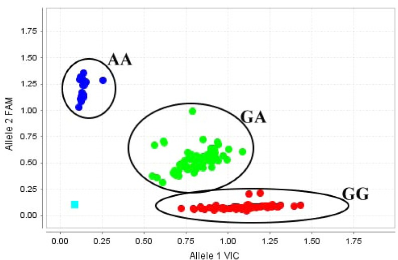 Comprehensive results of the genotype screen from 163 ducks. The data obtained using the StepOne PCR system shown in Fig. 4 were analyzed using TaqMan Genotyper software, and each genotype was grouped and expressed in a different color. The light blue square on the lower left corner indicates the no-DNA template control (NTC).