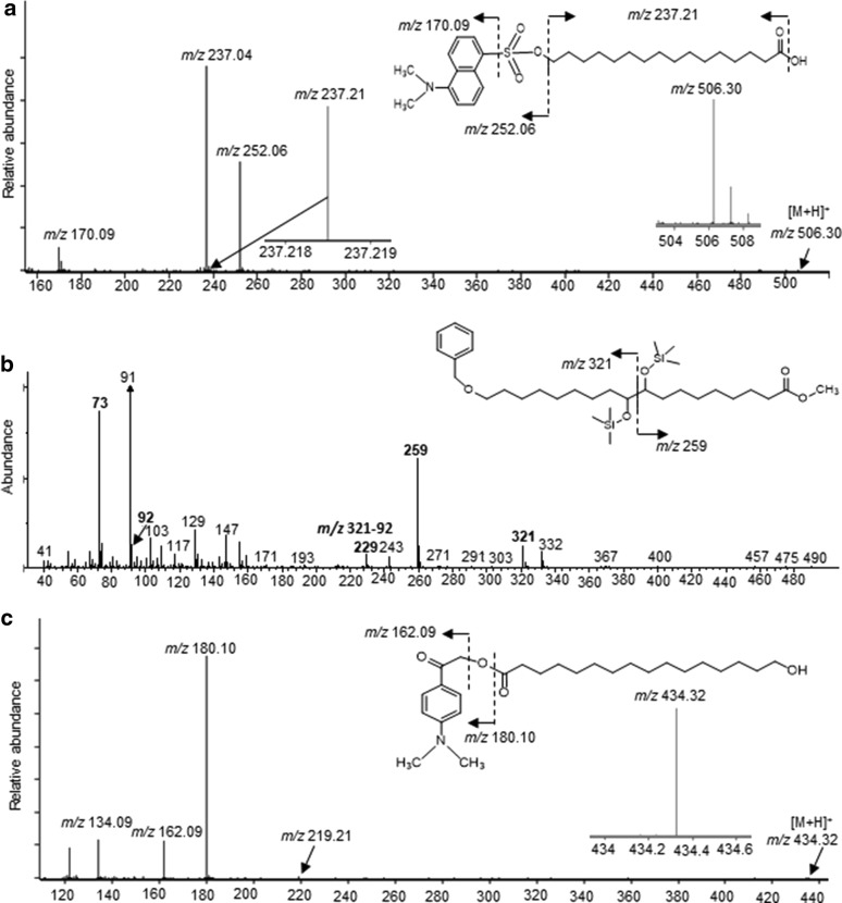 Chemical derivatization of non-esterified-hydroxyl- and carboxyl groups in intact cutin. a LC–MS/MS characterization of a cutinase hydrolysis product obtained from dansylated cutin; identification of the dansyl-derivative of 16-hydroxy-16:0 ( m/z 506.30). b GC/MS characterization of a cutinase hydrolysis product obtained from benzyl- O -alkylated cutin; identification of 18- O -benzyl-derivative of 9,10,18-trihydroxy-18:0. c LC–MS/MS characterization of a cutinase hydrolysis product obtained from DmPA-derivatized cutin; identification of DmPA-derivatized 16-hydroxy-16:0 ( m/z 434.38)