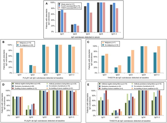 Distribution of PLA 2 R1- and THSD7A-specific IgG subclasses at baseline. (A) Detection of antigen-specific IgG subclasses in the complete study cohort by Western Blot using recombinant proteins. All patients were found to be positive for antigen-specific IgG4-antibodies. Antigen-specific IgG3 antibodies were more common than antigen-specific IgG1, while IgG2 was detected less often. The distribution of (B) PLA 2 R1- and (C) THSD7A-specific IgG subclasses was not different in patients with or without malignancy. Patients with (D) PLA 2 R1- or (E) THSD7A-associated MN were grouped depending on the clinical outcome: negativity of autoantibodies during follow-up, remission of proteinuria, doubling of serum creatinine. IgG1-3 depicts the percentage of patients in whom at least one antigen-specific IgG subclass (IgG1, IgG2, or IgG3) was detected in addition to IgG4.