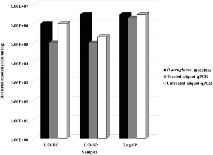 Effect of DNase I treatment on P. aeruginosa quantification by qPCR. The effect of DNase I treatment was assessed by comparing the qPCR counts of two aliquots of the same sample, one digested and one undigested. L/D-BC: P. aeruginosa ATCC 9027 broth culture containing live and dead cells. L/D-SP: sputum sample spiked with 3 × 10 6 cells of a broth culture containing live and dead cells. Log-SP: sputum sample spiked with 3 × 10 6 cells of a log phase culture