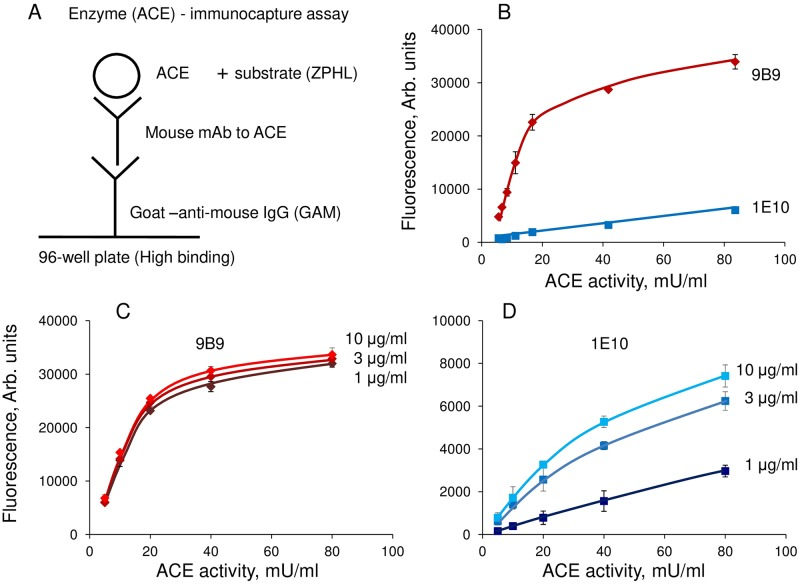 Enzyme (ACE) immune-capture assay. A . Scheme of the method. Goat anti-mouse IgG are loaded on the 96-wells plate to minimize non-specific adsorption of both mAbs and ACE, as well as prevent putative denaturation of some mAbs as a result of a contact with plastic. After washing of unbound anti-mouse IgG, mAbs to ACE are applied to the plate and, after another washing, analyzed ACE source is added. The amount of ACE in complex with any mAb is estimated by measuring precipitated ACE activity towards specific substrate, usually ZPHL, added directly into the wells. B . The dependence of the fluorescence (reflecting relative ACE activity in wells) on the loaded ACE activity on wells covered by strong mAb 9B9 (10 μg/ml) and weak mAb 1E10 (10 μg/ml). C . The dependence of the fluorescence signal on the loaded ACE activity at different concentrations of the loaded strong mAb 9B9. D . The dependence of the fluorescence signal on the loaded ACE activity at different concentrations of the loaded weak mAb 1E10.