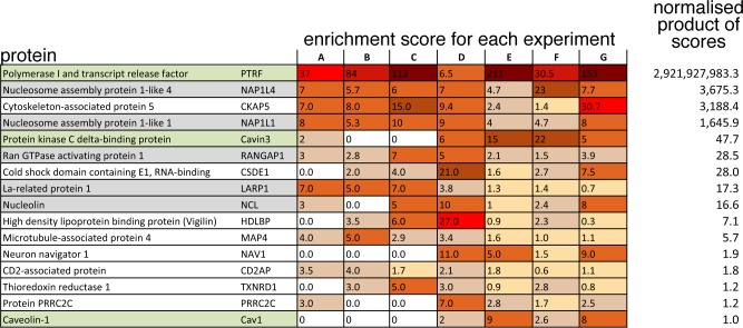 Candidate cavin1-interacting proteins identified by BioID. To show all proteins from 7 pooled BioID experiments with a normalised product of enrichment scores greater than that of caveolin1 –the known caveolar protein to which the scores were normalised. A score of zero means that the specified protein was not detected in that experiment. Protein names are colour coded: green–known caveolar component, grey–nuclear protein. To aid visualisation, enrichment scores are shaded with a higher score having stronger shading.