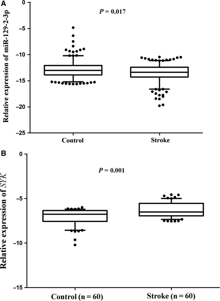 The expression levels of miR‐129‐2‐3p and SYK gene in IS patients and control volunteers. (A) miR‐129‐2‐3p expression was detected in the whole blood of 270 ischaemic stroke patients and 270 control volunteers. The relative expression levels were normalized to U6 and then log‐transformed. (B) The expression levels of SYK gene were detected in the whole blood of 60 ischaemic stroke patients and 60 control volunteers. The relative expression levels were normalized to beta‐actin and then log‐transformed. The whiskers of the plots represent the 5‐95 percentiles. Comparison of gene expression between the two groups of cohorts was analysed by the Student's t test