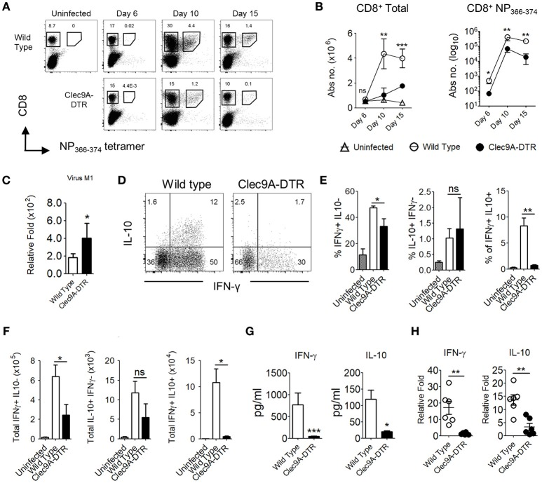 Impaired effector CD8 + T cell responses in the absence of pulmonary CD103 + cDC1s. (A) NP 366−374 -specific CD8 + T cells in the lungs of uninfected, infected wild type, and Clec9A-DTR mice (day 6, 10, and 15 post infection). (B) Kinetics of total CD8 + T cells and NP 366−374 -specific CD8 + T cells in the lungs of uninfected, infected wild type, and Clec9A-DTR mice. Absolute numbers are shown. (C) Lung virus load was measured by relative quantification of M1 viral protein in infected wild type and Clec9A-DTR mice on day 10 post infection. (D–F) Lung cells were harvested from uninfected, infected wild type, and Clec9A-DTR mice on day 10 post infection and stimulated with PMA/Ionomycin for 3 h followed by Brefeldin A incubation for an additional 3 h. Intracellular IFN-γ and IL-10 staining profiles (d) of pulmonary CD8 + T cells, frequency (E) and total numbers (F) of IFN-γ-producing, IL-10-producing, and IFN-γ/IL-10 double-producing CD8 + T cells in the lungs. (G) IFN-γ and IL-10 BAL levels as measured by sandwich ELISA (H) Relative quantification of IFN-γ and IL-10 transcripts. Data are shown as mean ± SEM. * p