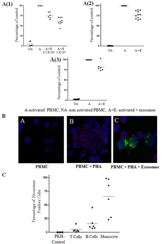 Exosome suppression of activated peripheral blood mononuclear cell (PBMCS) and lymphocytes and internalization assays. (A) Thymidine incorporation assays. Mesenchymal stem cell (MSC)-derived exosomes co-cultured with: (1) PHA-activated PBMCs. The results summarize 3 experiments with 6 batches of exosomes derived from 0.5 × 10 6 MSCs and 9 batches of exosomes derived from 1 × 10 6 MSCs (batches no. 1–9). Control—Activated condition counts set to represent 100%. P