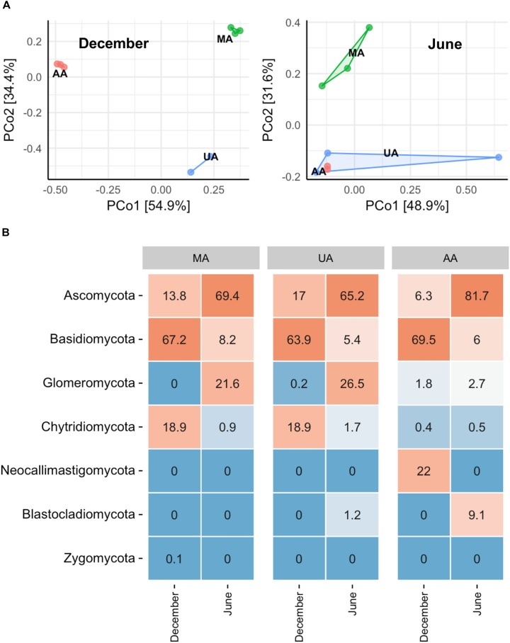 Fungal community composition of reactor biofilms over two seasons of operation. (A) PCoA, (B) phylum level community. MA, influent using water from mountain area; UA, influent using water from urban area; AA, influent using water from agricultural area.