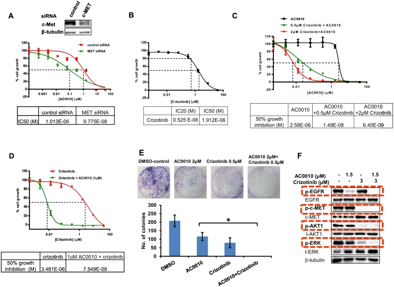 Overcoming AC0010 resistance by targeting c-MET in cell culture model. (A) H1975-P1-R1 cells were transfected with siRNA targeting c-MET, along with the control siRNA, and the sensitivity of transfected cells to AC0010 was determined by WST-1 assay. Western blot analysis was performed to show c-MET knockdown. (B) Growth curve of H1975-P1-R1 cells treated with various concentrations of crizotinib. (C) Growth curve of H1975-P1-R1 cells treated with various concentrations of AC0010 in combination with 2 μM crizotinib or 0.5 μM crizotinib ( n = 3). (D) Growth curve of H1975-P1-R1 cells treated with 1 μM AC0010 in combination with various concentrations of crizotinib ( n = 3). (E) Clonogenic survival assays of H1975-P1-R1 cells treated with AC0010, criztonib, or the combination with indicated concentrations ( n = 3). (F) Western blot analysis of the phosphorylation status of c-MET, EGFR, and their downstream molecules (AKT1 and ERK) in H1975-P1-R1 cells treated with indicated drugs and concentrations.