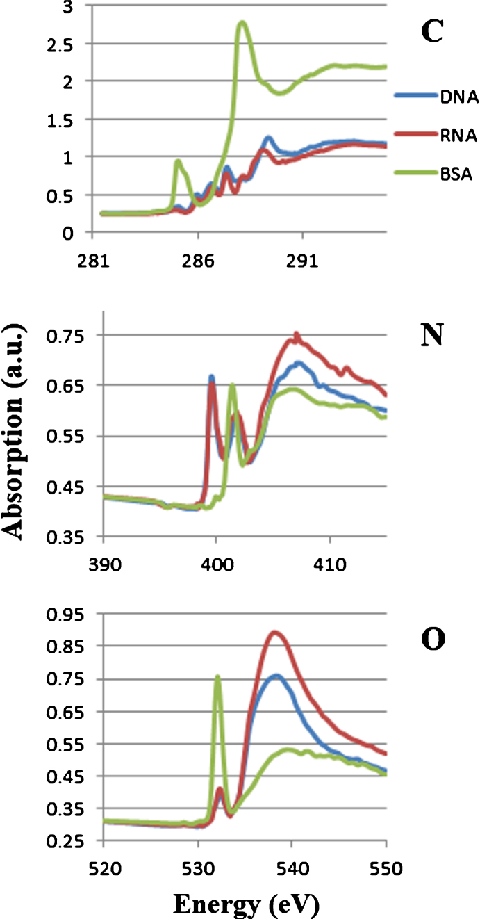 Soft X-ray absorption spectra of DNA, RNA and BSA at the photon energy regions of carbon, nitrogen and oxygen K absorption edge. Each spectrum was adjusted to be the same level at the left end of the photon energy.