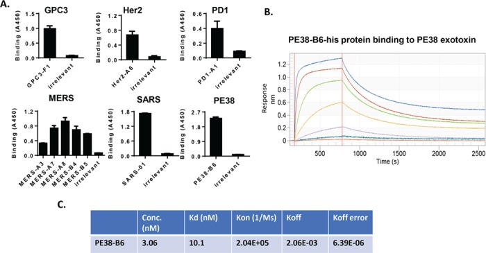 Identification of the binders by phage ELISA. (A) Monoclonal phage ELISA was carried out to identify the binders to GPC3, <t>Her2,</t> PD1, <t>MERS</t> S-protein, SARS S-protein, PE38, and hFc. A random phage that had no binding to all tested antigens was used as irrelevant control in the phage ELISA. (B) Octet kinetic assay for PE38-B6-his single-domain soluble protein. Seven concentrations of PE38-B6-his protein used from high to low are 780 nM, 195 nM, 48.8 nM, 12.2 nM, 3.06 nM, 0.76 nM, and 0.19 nM. (C) The representative data were shown for PE38-B6 concentration 3.06 nM. The K d , k on , k off , and k off standard error was summarized in this table.
