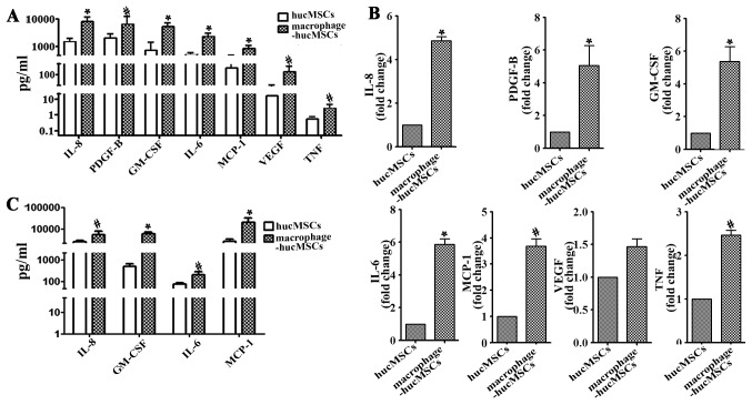 High levels of IL-8, PDGF-B, GM-CSF, IL-6, MCP-1, VEGF and TNF were presented in the supernatant from macrophage-hucMSCs. (A) The expression of cytokines (IL-8, P=0.0092; PDGF-B, P=0.0391; GM-CSF, P=0.0095; IL-6, P=0.0077; MCP-1, P=0.0084; VEGF, P=0.0441; TNF, P=0.0244) in the supernatant of the hucMSCs cultured with or without macrophages were measured using a Luminex assay. (B) mRNA expressions of IL-8, PDGF-B, GM-CSF, IL-6, MCP-1 and TNF significantly increased in the macrophage-hucMSCs. (C) Supernatants from the two aforementioned types of cells were assessed for IL-8, GM-CSF, IL-6 and MCP-1 expression by ELISA. Data are presented as the mean ± standard deviation; *P