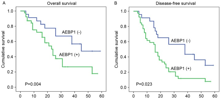 Kaplan-Meier survival analysis of primary colorectal cancer patients (n=62) following surgical resection with high AEBP1 expression (n=39) and low AEBP1 expression (n=23). (A) OS following surgery and (B) DFS following surgery. AEBP1, adipocyte enhancer-binding protein 1; OS, overall survival; DFS, disease-free survival.