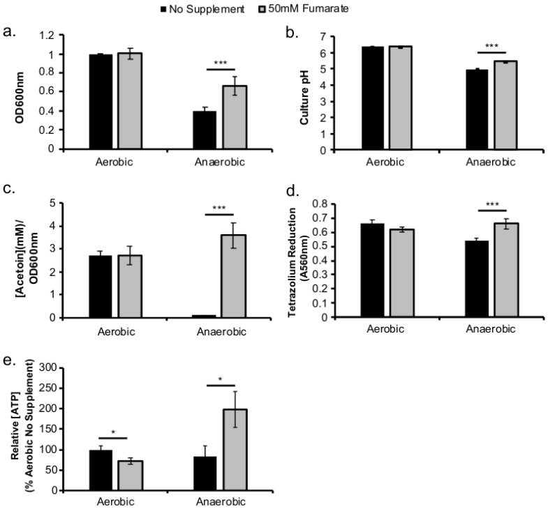 Fumarate supplementation results in enhanced L. monocytogenes anaerobic respiratory activity. L. monocytogenes was grown overnight (16–20 h) aerobically or anaerobically in BHI at 37 °C with or without supplementation of fumarate (50 mM). Culture optical density was measured at 600 nm ( a ). The pH ( b ) and acetoin concentration ( c ) were determined in culture supernatant. Reduction of tetrazolium salt ( d ) was determined in washed bacterial pellets. Relative intracellular ATP levels ( e ) was quantified using a luciferase-based assay. Averages of triplicates were plotted with error bars representing standard deviation. Data represent at least three independent experiments. Significant differences (*, p