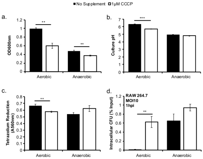 Inhibition of aerobic respiratory activity with CCCP phenocopies anaerobically grown L. monocytogenes . L. monocytogenes was grown at 37 °C in BHI with or without 1 µM CCCP. Culture optical density was measured at 600 nm. ( a ) pH was measured in culture supernatant. ( b ) While reduction of tetrazolium salts was measured in washed bacterial pellets. ( c ) Bacteria from overnight cultures were used to infect RAW264.7 macrophages for 30 min at an MOI of 10 where intracellular colony forming units (CFU) was determined and compared to the CFU in inoculum. ( d ). Averages of triplicates were plotted with error bars representing standard deviation. Data represent three independent experiments. Significant differences (**, 0.001