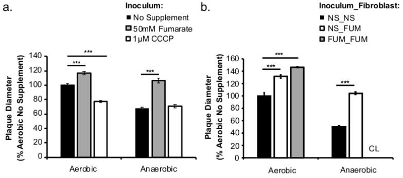 Prior fumarate treatments enhance cell-cell spread. Overnight cultures of L. monocytogenes were washed and used to infect fibroblast monolayer cells for 1 h. After 72 h of incubation, plaque sizes were measured by neutral red staining. Diameters of at least 30 plaques were measured. ( a ) Fumarate (50 mM) or CCCP (1 µM) was supplemented only in the growth of the bacterial inoculum. ( b ) Compared to no fumarate control (NS_NS), fumarate was added only to fibroblasts prior to infection (NS_FUM) or to both the growth of L. monocytogenes and fibroblasts prior to infection (FUM_FUM). No exogenous fumarate was added during infection. Fumarate supplementation in both L. monocytogenes and fibroblasts prior to infection resulted in complete lysis where plaque sizes were not determinable (CL, Complete Lysis). Significant differences (***, p