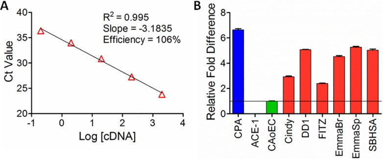 Gene transcription of PSMA across cell lines. (A) Validation of canine-specific TaqMan PSMA primer efficiency across 5-log orders of RNA concentration using CPA, a canine prostatic carcinoma cell line. (B) Comparative PSMA gene expression across canine cell lines. Relative PSMA expressions for six cHSA cell lines (red) compared to the non-malignant canine endothelial cell line, CAoEC (green). Positive and negative control cell lines include CPA (blue) and ACE-1 (purple), respectively. Representative data presented from 3 independent biologic replicates with 5 technical replicates for each cell line.