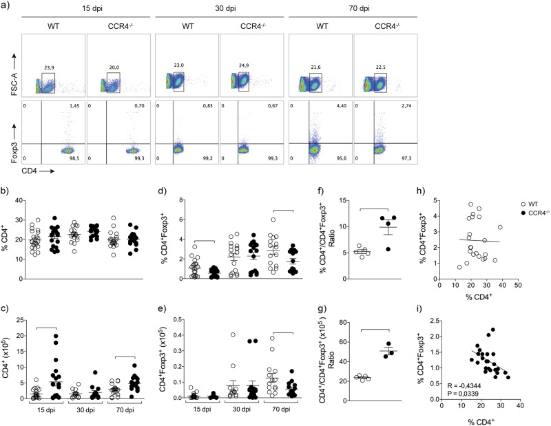 CCR4 increases lung CD4 + Foxp3 + cells during M. tuberculosis infection. WT (white circles) and CCR4 −/− (black circles) mice were infected with M. tuberculosis as described in the Fig. 1 . At 15, 30 and 70 days of infection (dpi) the lungs were collected. Representative analysis of CD4 + and CD4 + Foxp3 + cells a . Frequency and total number of CD4 + cells b , c and CD4 + Foxp3 + cells d , e . Data are representative of three-independent experiments ( n = 16–22), expressed as the mean ± SEM. Ratio of frequency f and total number g of CD4 + and CD4 + Foxp3 + cells obtained from lungs of infected WT and CCR4 −/− mice. Data are representative of one experiment reproduced four times ( n = 3–5), expressed as the mean ± SEM. Correlation between the frequency of CD4 + and CD4 + Foxp3 + cells from lungs of infected WT and CCR4 −/− mice h , i . Data are representative of four-independent experiments ( n = 22–25). All data are expressed as the mean ± SEM. Symbols represent individual animals and bars show the difference ( P